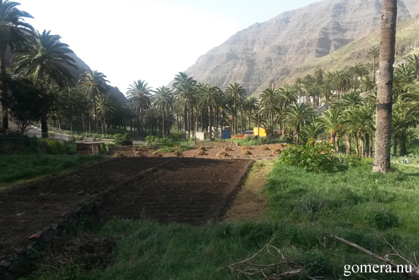 La Gomera Valle Gran Rey odling